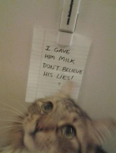 Hmm..I must do this, cause my cat always cheating :P