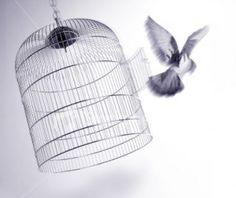 Bird cage/ Free Bird