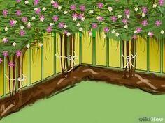 Изображение с названием Plant Clematis Step 8