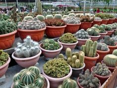 Succulents In Containers, Cacti And Succulents, Planting Succulents, Pictures Of Succulents, Cactus Pictures, Cactus Pot, Cactus Flower, Cactus Planters, Nature Plants