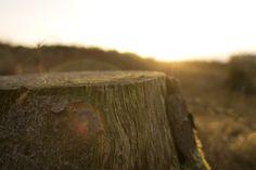 Public Domain Images - Unsplash.com - Tree Stump Brown Wood Cut Sun Rise Lens Flare - Public Domain Images   Free Stock Photos