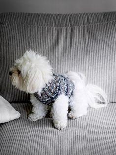 Tee itse lämmin koiran neule sukka- ja heijastinlangoista. Muokkaa ohjetta koirasi mittojen mukaan. Cute Crochet, Hush Hush, Animals And Pets, Dog Cat, Cats, Pattern, Knitting Ideas, Luigi, Embroidery
