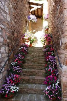 Corner deck stairs potted plants Ideas for 2019 Beautiful Gardens, Beautiful Flowers, Corner Deck, Deck Stairs, Stone Stairs, Romantic Cottage, Stairway To Heaven, Fancy, White Paints