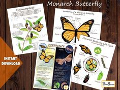 MONARCH BUTTERFLY Unit Study • MEGA Printable butterfly bundle - anatomy, life cycle, posters, cards, puzzle • Montessori materials Science Experiments For Preschoolers, Teaching Activities, Science Fun, Butterfly Metamorphosis, Montessori Materials, Montessori Education, Apple Unit, Butterfly Life Cycle, Printable Butterfly