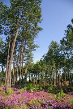 L'entreprise Gascogne Bois : origines, sites et management #pinmaritime #landes #pin #gascogne
