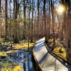 A favorite shot from yesterday's hike at Congaree National Park. Top 10 National Parks, Congaree National Park, Day Plan, What A Wonderful World, Get Outside, Wonders Of The World, Places To Go, Trail, Beautiful Places