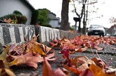 leaves on the street low angle photography