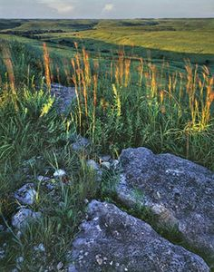 Flint Hills of Kansas, the Nation's largest remaining tall grass prairie, winding from Council Grove south to Cassoday, Kansas. Photo by Kevin Sink. Kansas Usa, State Of Kansas, Kansas City, Prairie Meadows, Flint Hills, Land Of Oz, Oregon Trail, Natural World, Wild Flowers