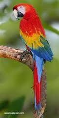 """Résultat de recherche d'images pour """"les plus beaux oiseaux"""""""