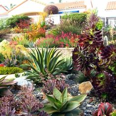 Amazing succulent landscape. Love all the colors and textures.