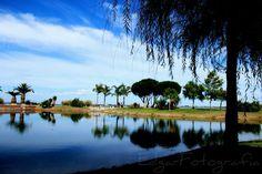Um bonito lago num parque da minha terra