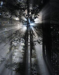 Silver light. #trees #forest #light