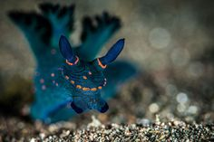 2014 Photo Contest: 20 Amazing Nudibranch Pictures | Scuba Diving