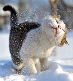 So Adorable Cat