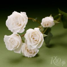 Rio Roses: Princess