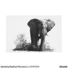 Shop Splashing Elephant Acrylic Wall Art, x Acrylic Print created by inXSWildlife. Wildlife Home Decor, Wildlife Art, Free High Resolution Images, Wildlife Photography, Art Photography, Black And White Lion, Acrylic Wall Art, African Safari, Art Gallery