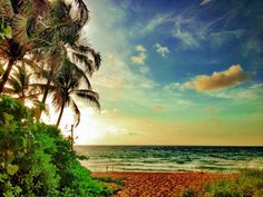 Peaceful tropicality, Courtesy of FtLauderdaleSun