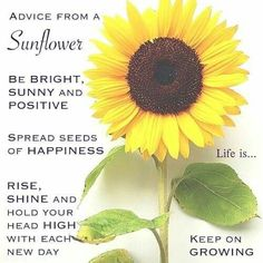 Advice from a sunflower- Sunshine add a little water