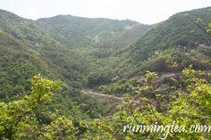 Liu An Gua Pian tea plantation