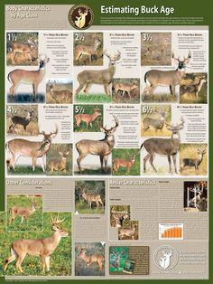 Selective Buck Harvest Poster | Quality Deer Management Association