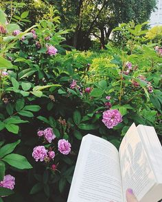 Its a steamy day in Chicago but Im inside with books and beer and soccer and friends. #booksandflowers #books #reading #readingandwalking #readingwhilewalking #bookstagram #reading #chicago