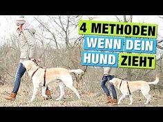 4 METHODEN zur Leinenführigkeit | Hund BEI Fuß beibringen | Hundeblog Hundeerziehung - YouTube