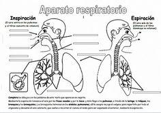 Aparato respiratorio primaria-1                                                                                                                                                      Más
