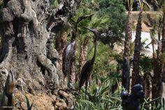 Bacalhôa Buddha Eden Bald Eagle, Buddha, Portugal, Bird, Animals, Places, Fotografia, Pictures, Animales