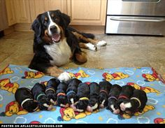 Bunches of Puppies - newsletter
