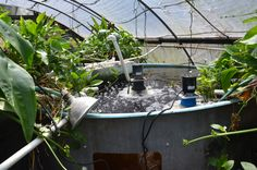 Strategic Points in #Aquaponics #sustainability #Innovation Controlled environment #agriculture