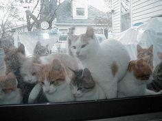 猫好き@画像bot(@neko_daisukipic)さん | Twitter