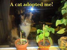 Calico & Haiku: A cat adopted me. Luzdelmes