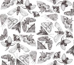 Moths by Gavin Rutherford