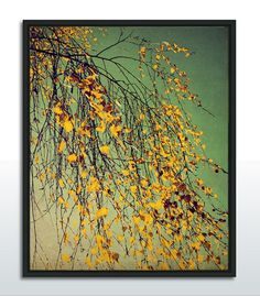 """mellow yellow"" Photography by Ingrid Beddoes  Photo print, Canvas print, Fineart poster, framed , etc... http://www.artefactum-shop.de/natur-pflanzen/ib11/"