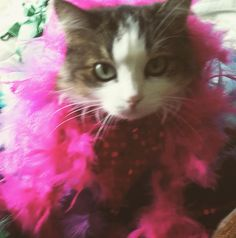 I'm Lita and I know I look good!  Submitted by: Marlena Jennifer #cattitude #meow #catlover #catblog #cat #catsofinstagram #instagramcats #catstagram #instacat #whatcatsdo #pet #petstagram