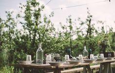 In the wineyard