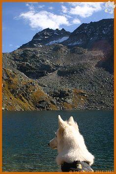 www.dogwalktrail.com vakantie actief met de hond Zell Am See, Trail, Mountains, Dogs, Nature, Instagram, Kaprun, Naturaleza, Pet Dogs