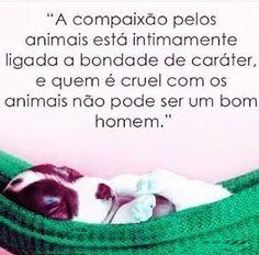 EU AMO,RESPEITO E CUIDO! ❤ #filhode4patas  #petmeupet  #cachorro  #amocachorro  #gatofolgado  #gato  #amoanimais  #protecaoanimal  #direitoanimal