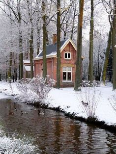 Pretty English cottage in the woods.