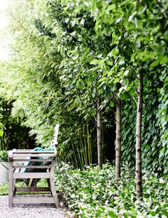 A garden of contrasts that works harmoniously - Homes To Love