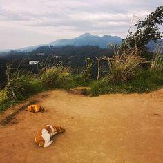 Friendly dogs sleeping in Sri Lanka  #srilanka #dogs #nature #safari #beach #reise #travel #traveling #reiseblog