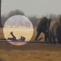 4,055 mentions J'aime, 112 commentaires - @wildlifeclasss sur Instagram : « A baby elephant got trapped in a water trough when lions were closing in, another elephant family… »