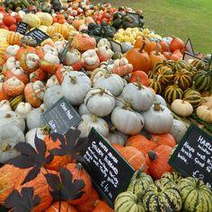 Ornamental gourds