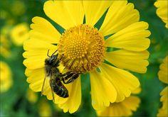 Biene - Jahreszeiten - Galerie - Community