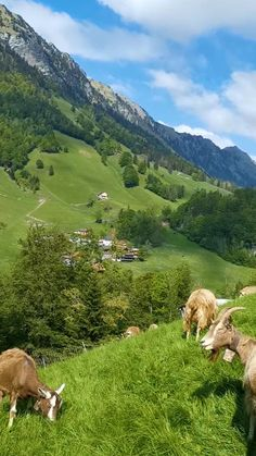 Explore the most beautiful Panoramas & scenic Landscapes in Switzerland.  It's not always Lauterbrunnen, Zermatt or Jungfrau. The link guides you to our Homepage with lots of insider tips, you don't get anywhere else. Written by a local outdoor enthusiast. They will fuel your wanderlust with their scenic landscapes. Best rated on Tripadvisor, Myswisspanorama also organises guided tours by an environmental & Swiss expert (MSc) to the insider spots of Switzerland. #Switzerlandtravel #Schweiz Beautiful Photos Of Nature, Beautiful Places To Travel, Nature Pictures, Amazing Nature, Beautiful Landscapes, Aesthetic Photography Nature, Nature Aesthetic, Nature Photography, Travel Photography