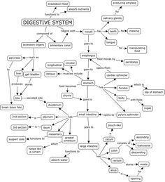 Body World Digestive System | Science class | Pinterest ...