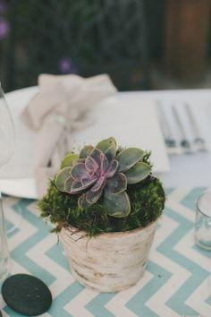 Succulents & moss