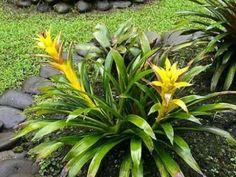 Te proponemos incluir en el jardín o terraza de tu casa alguna de las tres plantas que se caracterizan por ser resistentes. Dureza y resistencia que no impide que sean plantas muy bellas.
