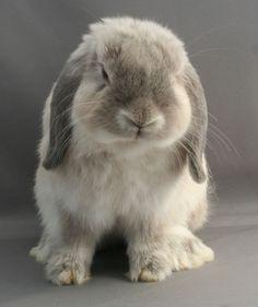 #bunny #rabbit
