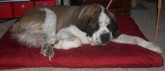 DIY large dog bed